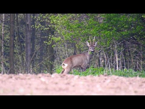 Nikon coolpix P900.Wildlife Nature.Spring.Forest.Birds.Poland.Part--2