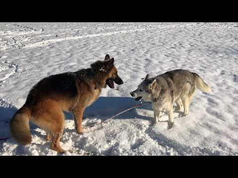 Zeus and Kaden playing in the snow