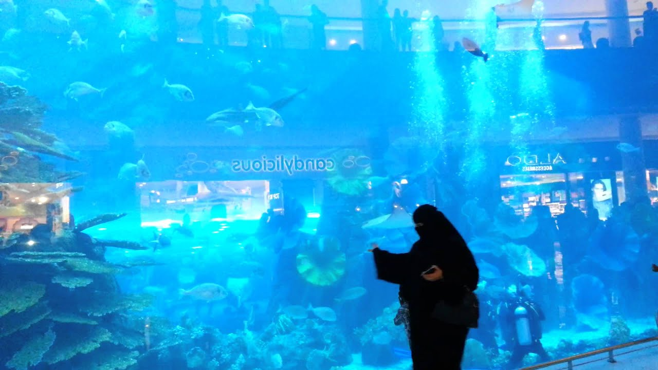 Fish aquarium in uae - Dubai Aquarium And Underwater Zoo Sharks Fishes Jellyfish Dubai Zoo Places To Visit Uae