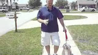 Dale McCluskey's Dog Training - Board & Train - Buster