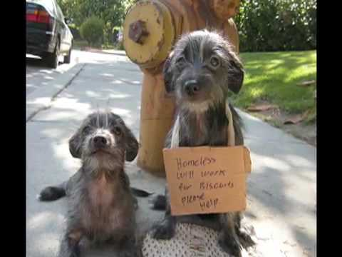 free puppies to good home los angeles area youtube