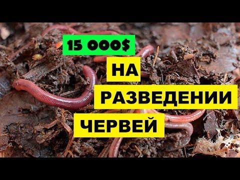 Вермиферма своими руками как бизнес идея   15 000$ на разведении червей