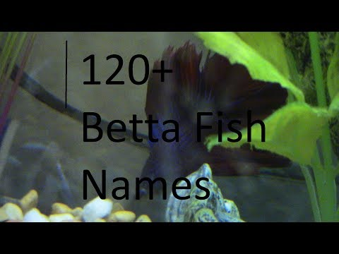 ♥ 120+ Adorable Betta/Fish Names!!