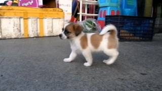 Small Cute dog Pretty dog 可愛い犬 Small Cute dog Abandoned dog Slo...