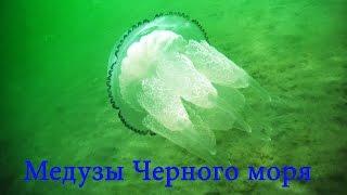 Медузы Черного моря(Ныряем с камерой в воды Черного моря в прибрежной полосе. Анапское побережье зачастую обилует мелкими водо..., 2015-08-10T16:48:51.000Z)