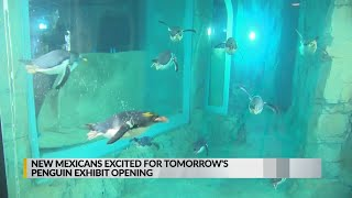 Less than 24 hours until Penguin Chill exhibit grand opening