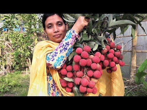 Farm Fresh Litchi Harvesting And Eating Challenge | Sweet Lychee Fruit By Street Village Food