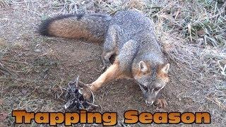 2013 Trapping Raccoon Fox Skunk Opossum Pennsylvania - Shane