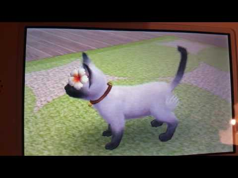 Nintendogs + Cats a new cat