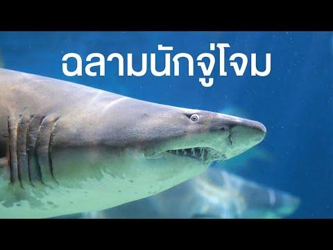 สารคดี สำรวจโลก ตอน ฉลามนักจู่โจม