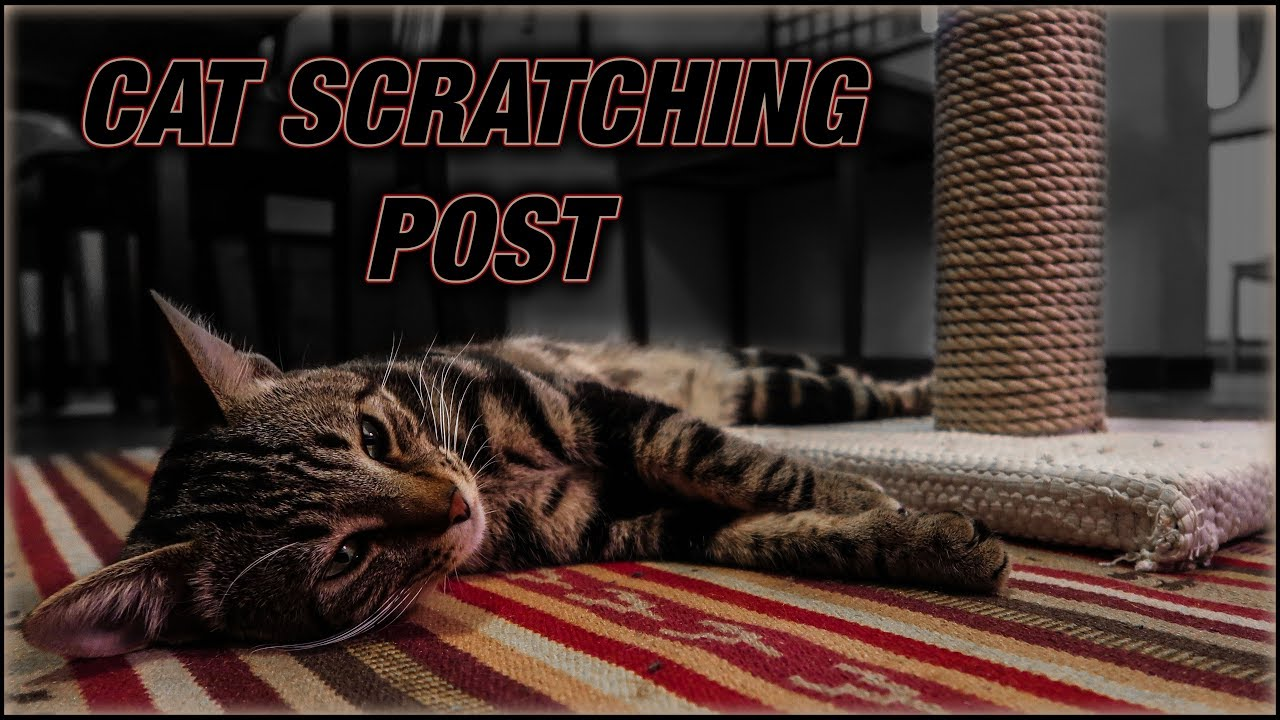 Diy Cat Scratching Post Super Cheap And Easy