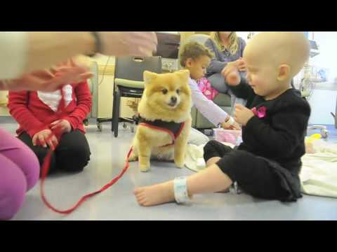 Pet Therapy team brings smiles to hospital's chemo kids