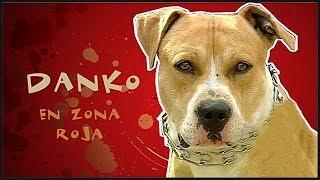 MALAS PULGAS (Danko) En Zona Roja thumbnail
