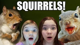 Squirrels Loose in the House!