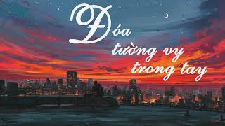 ĐÓA TƯỜNG VY TRONG TAY - Lyrics [VIETSUB] |Hoa Bỉ Ngạn