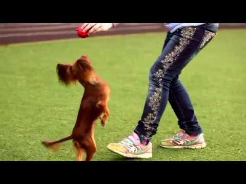 Сморлики клуб собак миниатюрных пород купить щенка мини