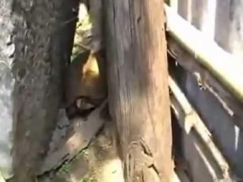 หมู่บ้านเต่ามัญจาคีรี Turtle Village Manja Kiri