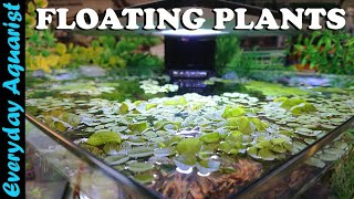 FLOATING PLANTS: 6 Reasons You…