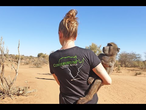 Rescued Animal Conservation in Namibia