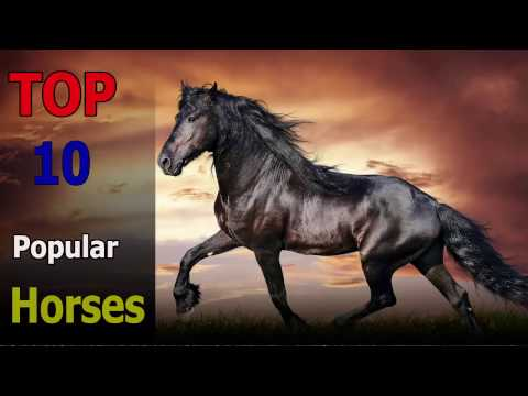 Top 10 popular horse breeds | Top 10 animals