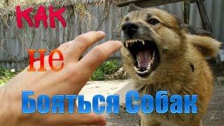 Отпугиватель собак или как не бояться собак.