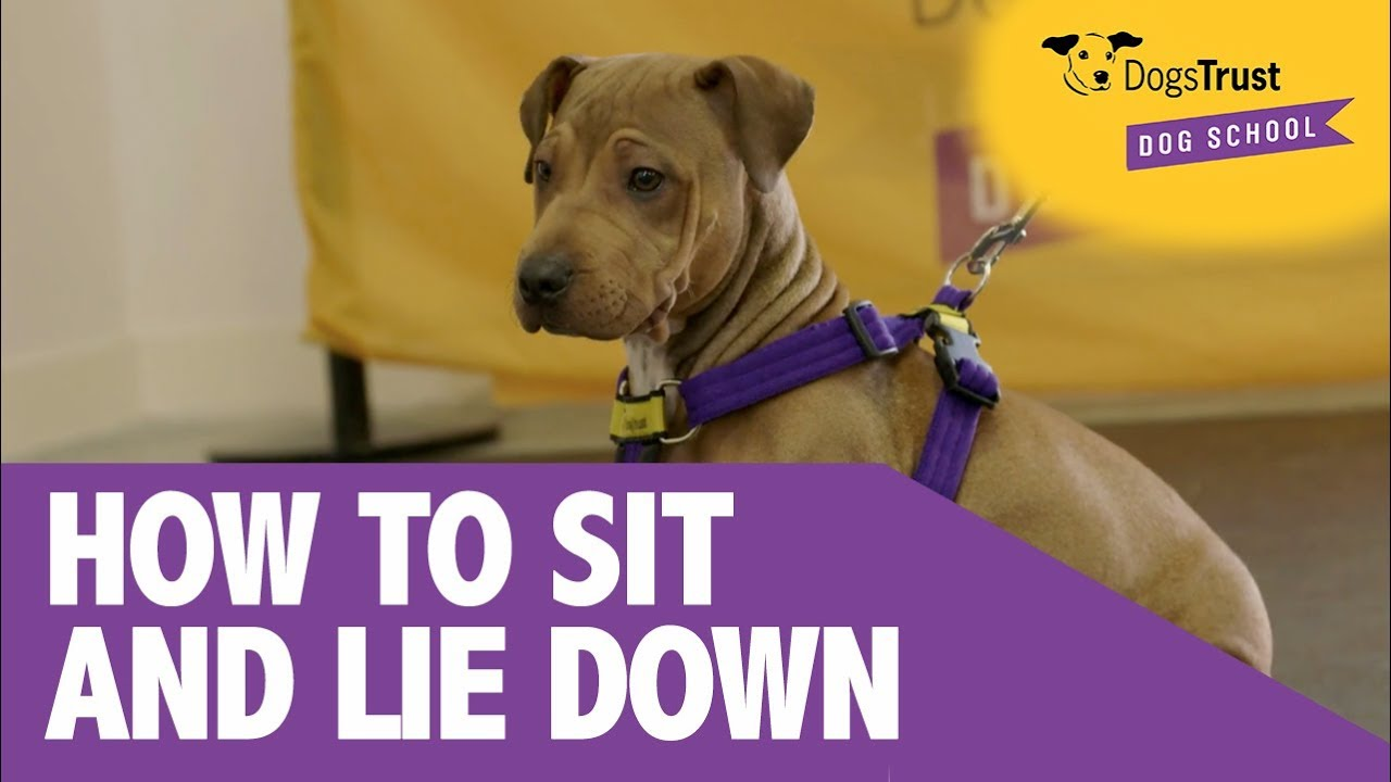 Tips how to teach a puppy to the tray 11