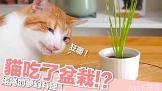 蛋捲:我這麼幸福可以嗎?貓吃了盆栽!?【貓副食食譜】好味貓鮮食廚房EP124