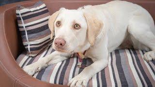 Video Milly - Retriever x - 2 Weeks Residential Dog Training download MP3, 3GP, MP4, WEBM, AVI, FLV Desember 2017
