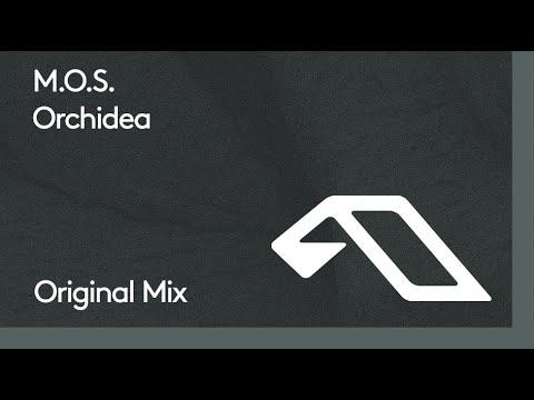 Download M.O.S. - Orchidea