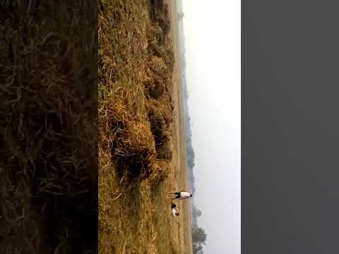 Vala ghoror babe Nara Tula karmachari