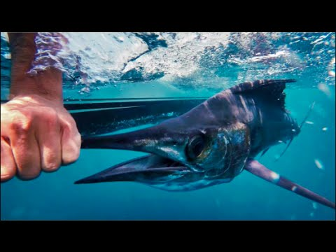 Offshore fishing with Happy Fish Charters in Boca Raton for Sailfish and Tripletail GoPro 1080P