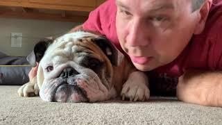 reuben-the-bulldog-it-s-almost-time
