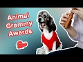 Animal Grammy Awards 2017: Funniest Singing Animal Clips & Compilation