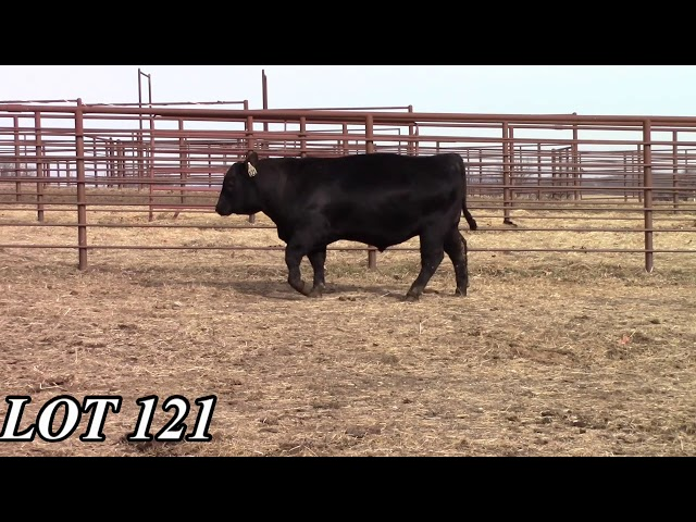 Mead Angus Farms Lot 121