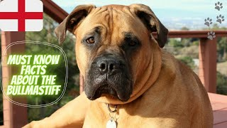 Getting To Know Your Dog's Breed: Bullmastiff Edition