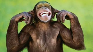 funny monkeys cute and funny monkey compilation