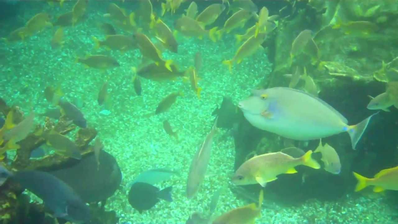 snorkeling with sharks at disneys typhoon lagoon youtube