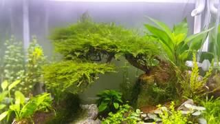 Bí quyết trộn CO2 cho hồ thuỷ sinh cực kỳ hiệu quả!