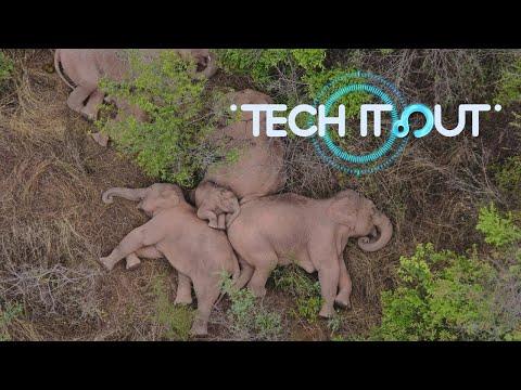 Tech It Out: Reasons behind wild elephants' wandering