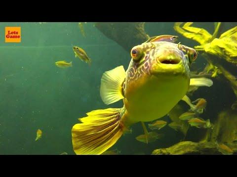 Aquarium For Kids - Exotic Fishes