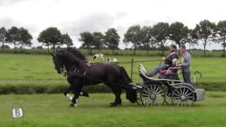 Продается пара фризских лошадей