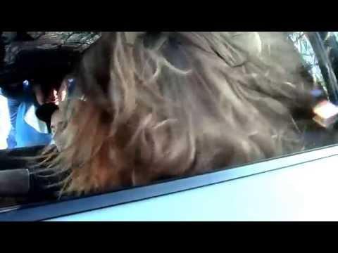 hair trick mazda atenza XM