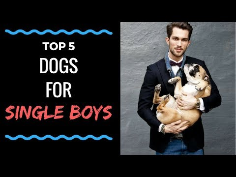 Top-5 dog breeds for Single boys | Ucguy Media