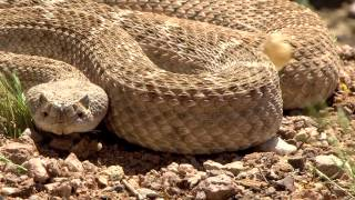 2013/2014 Arizona Wildlife Views - Show 12