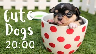 CUTE DOGS 20 MINUTE TIMER with MUSIC