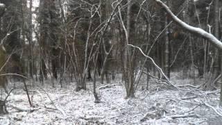Forgotten Deity - Path of Wolves (2014)