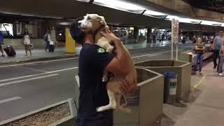 Собака встречает хозяина после разлуки