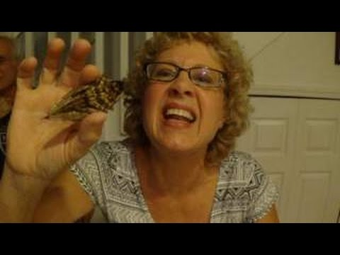 Old Lady Eats Giant Bug!!!