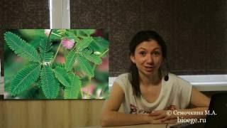 Уроки биологии: Адаптации растений (Вып. 38)