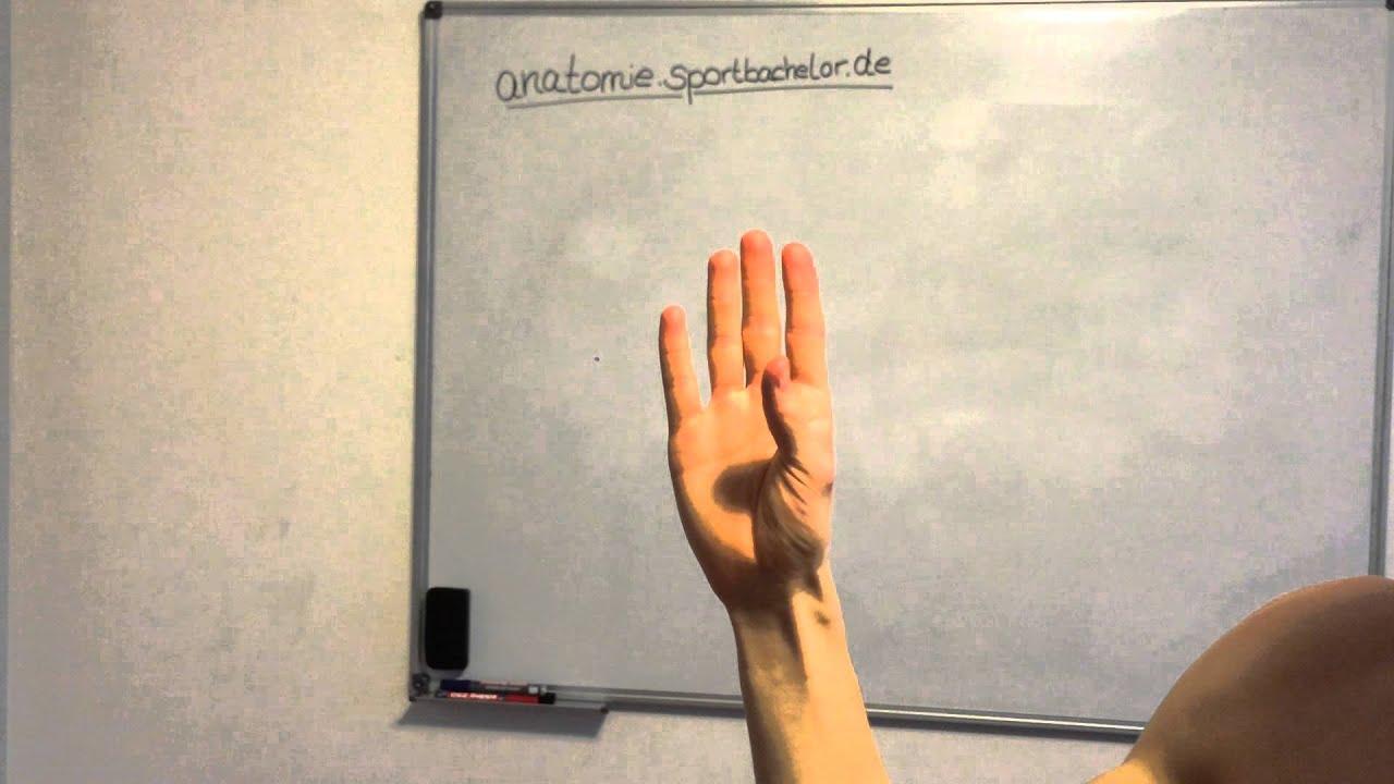 Opposition des Daumens - YouTube